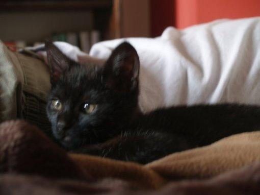 Teraz najedzony Pączek chętnie poszedłby spać, a tymczasem ja mu cykam fotkę, hihi.