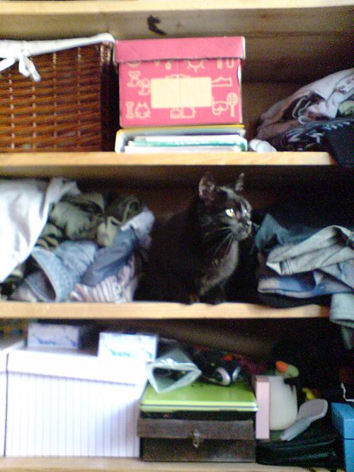 Pączek w szafie 2